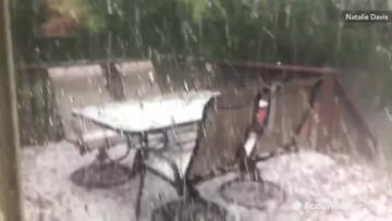 Dog watches hail cover backyard patio