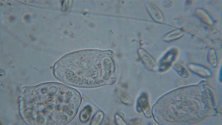 Ancient, 15,000-Year-Old Viruses Identified Frozen in Melting Glaciers