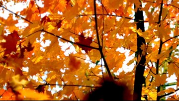 Fall Foliage Maps to Help You Find the Best Leaves