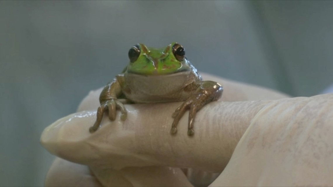 This 'Frog Whisperer' Speaks With Frogs for Science