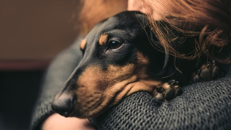Dog disease humans can catch confirmed in Iowa