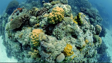 Australia's Great Barrier Reef outlook downgraded to 'very poor'