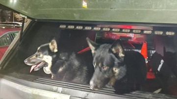 Troopers use beef sticks to lure dogs off busy interstate