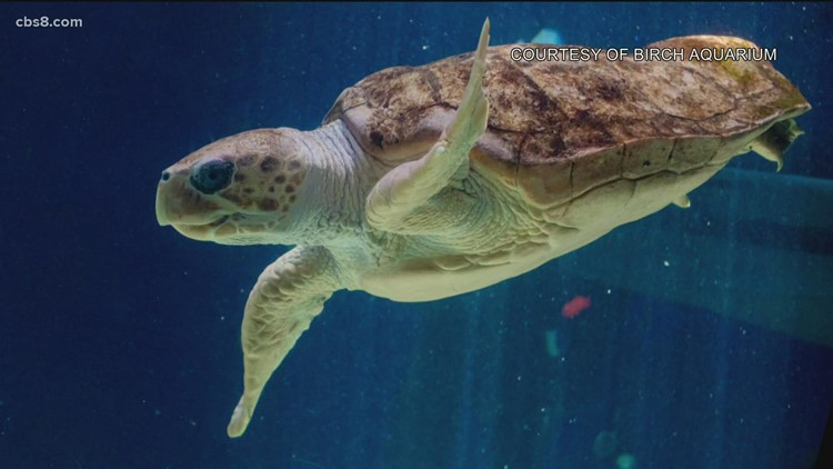 3D technology that gave turtle a unique shell, now used to check her progress