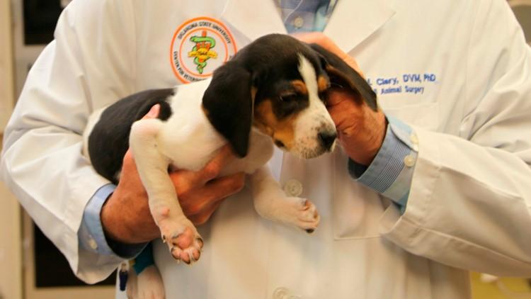 Puppy Paw Problems
