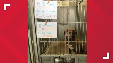 'I just need a 2nd chance' | Missouri dog has been waiting 7 years for adoption