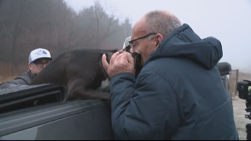'You made my week, my year, my life' | Dog who ran from deadly crash reunites with owner
