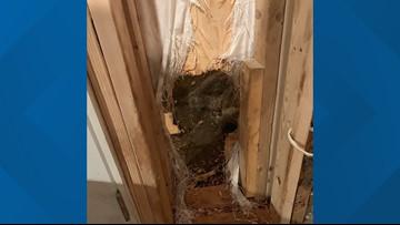Bear breaks into house, leaves by breaking through wall 'like the Kool-Aid Man'