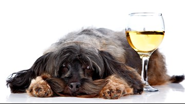 Puppies and prosecco: Colorado hotel package offers private puppy party to guests