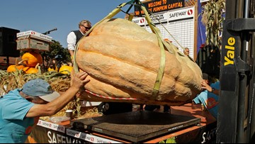Giant pumpkin weighing nearly 1 ton sets California record