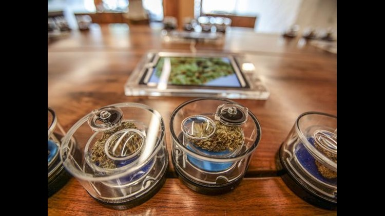 Clear containers allow customers to see and smell the 20 strains of marijuana offered at the MedMen marijuana dispensary on Santa Monica Blvd in West Hollywood.  (Photo: Richard Lui/The Desert Sun)