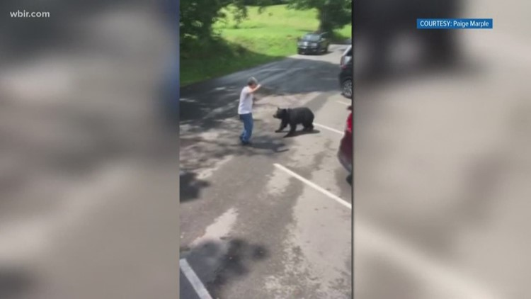Scary video shows momma bear lunging at