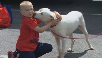 7-Year-Old Wins ASPCA Kid of the Year After Rescuing More Than 1,300 Dogs