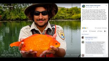 That's a big goldfish!