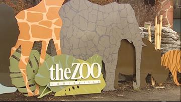 Zoo celebrates milestone with '50 Fest'