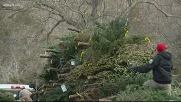 "Christmas tree recycle program a ""Success"""