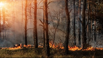 Forest officials urge caution during spring wildfire season
