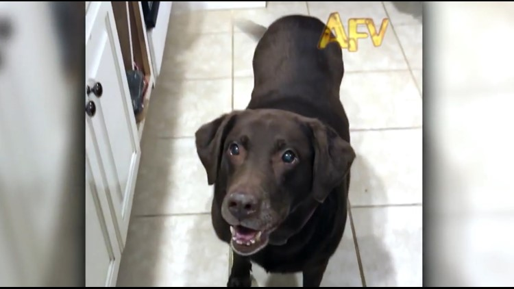 Kentucky family's dog catches treat, $10K prize on America's Funniest Home Videos