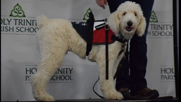 Meet Marley: Holy Trinity gets school therapy dog