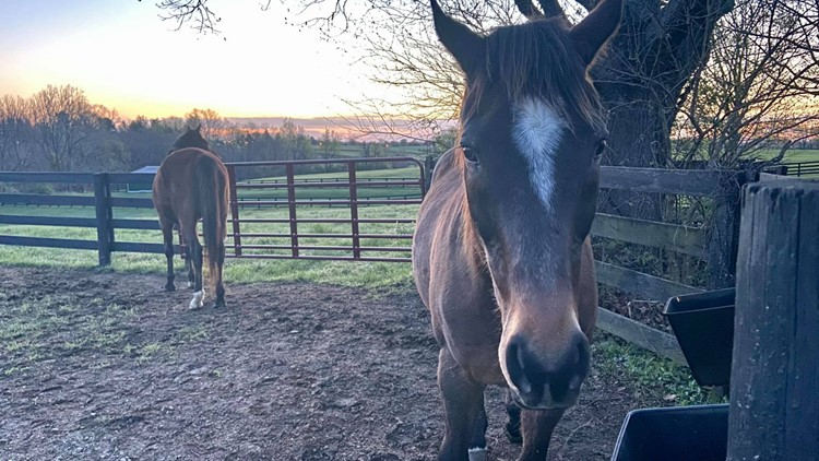 Kentucky sanctuary farm for retired thoroughbreds to open to the public in Oldham County