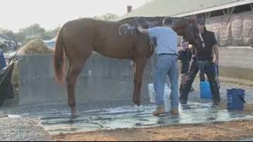 Kentucky Derby winner Justify gets bath at Churchill Downs