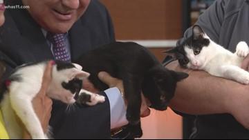 Pet of the Week: Cat siblings!