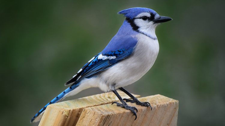 Kentucky Fish and Wildlife advises cease of bird feeding in Jefferson County amid influx of illness reports