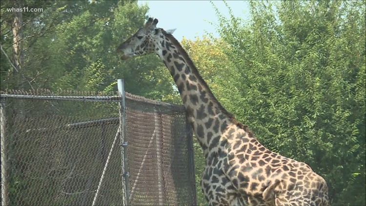 Louisville Zoo operating at full capacity, Splash Park to reopen June 18