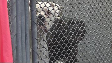 LMAS investigating Hazelwood neighborhood home after removing multiple animals