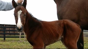 Triple Crown winner Justify's first foal born in Kentucky