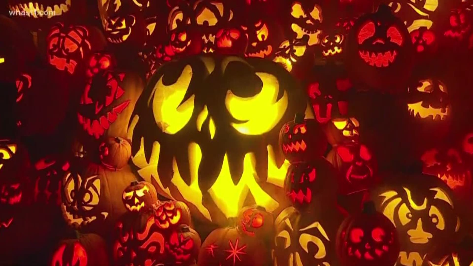 Halloween 2020 In Louisville Ky Jack O'Lantern Spectacular is back for 2020   whas11.com