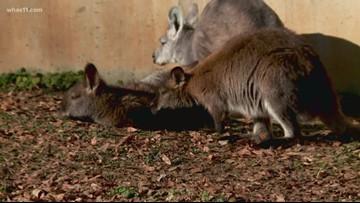 Louisville Zoo offer ways to help wildlife, people impacted by Australia bushfires
