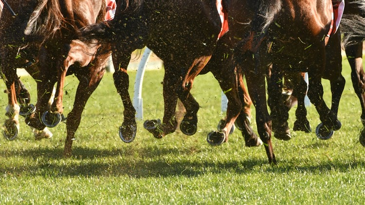 Senate passes bill to recognize national standard in horse racing