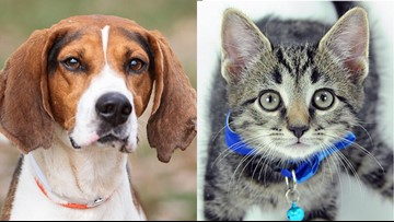 Nearly 100 animals find forever homes at Kentucky Humane Society adoption event