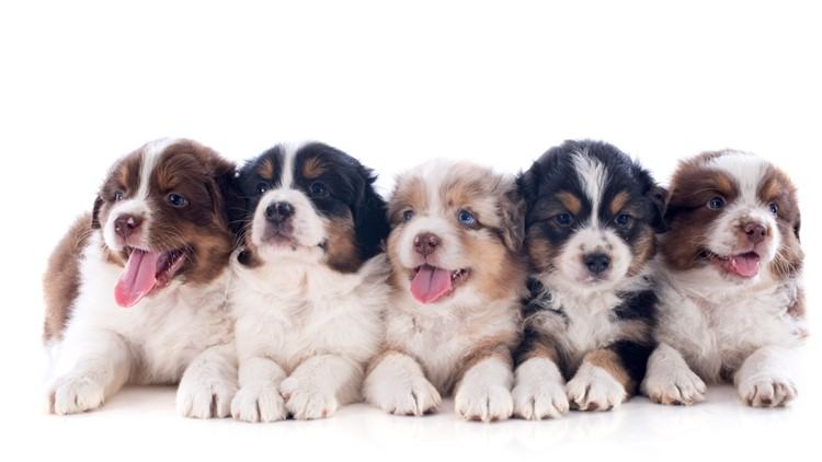 Uk Bans Pet Shops From Selling Puppies And Kittens Whas11com