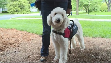 Holy Trinity Parish gets new therapy dog