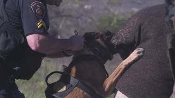 Military K9s Go Through Aggression Training