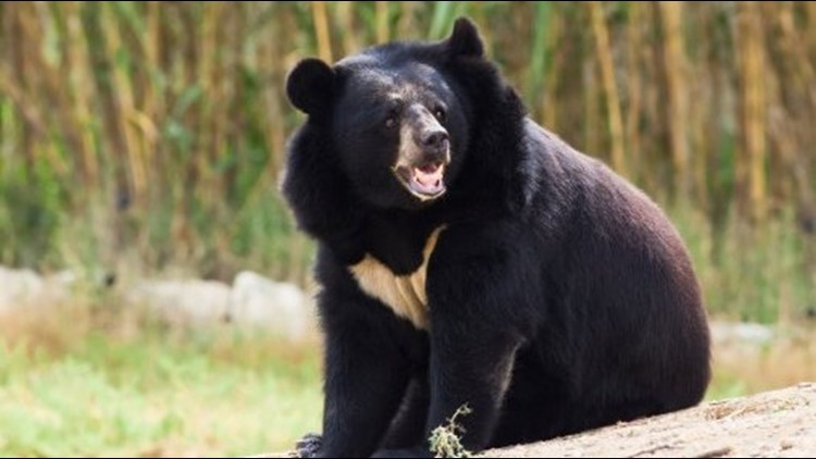 Man mauled to death trying to take selfie with a bear