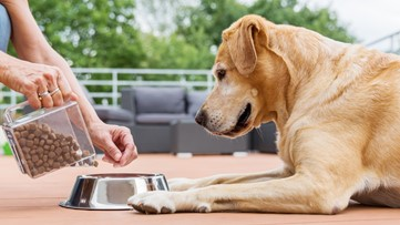 Kentucky Humane Society to open COVID-19 pet food bank