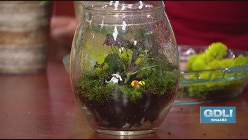 Low-maintenance + whimsical: Terrariums are the perfect glass-encased gardens