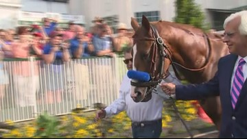 Fans cheer Triple Crown winner Justify during parade lap