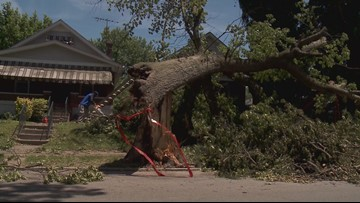 ON YOUR SIDE: City clears tree from sidewalk after WHAS11 report