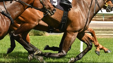 Prosecutor's task force to probe horse deaths at Santa Anita