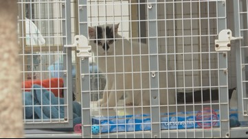 Indiana Animal Protection Association works to get long-term resident cats adopted
