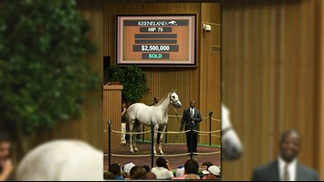 Tapit colt sells for $2.5 million to open Keeneland sales