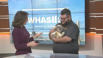 Pet of the Week: Rabbit