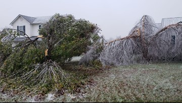 If an ice storm damages your trees, here's how you can salvage them