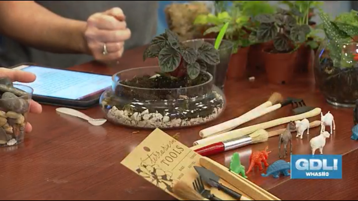 How cool! Terrariums bring tiny gardens into your home