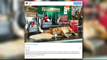 Ikea in Italy welcomes stray dogs this winter