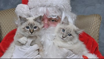 Your pet gets a picture with Santa, you get to help homeless animals